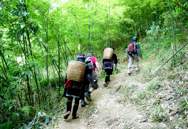 Sapa hiking through bamboo forest