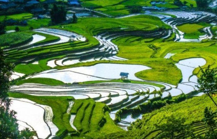 sapa- mu cang chai- rice terrace