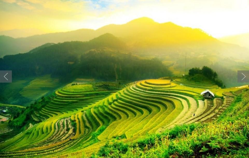 rice terrace - mu cang chai-vietnam-zonitrip