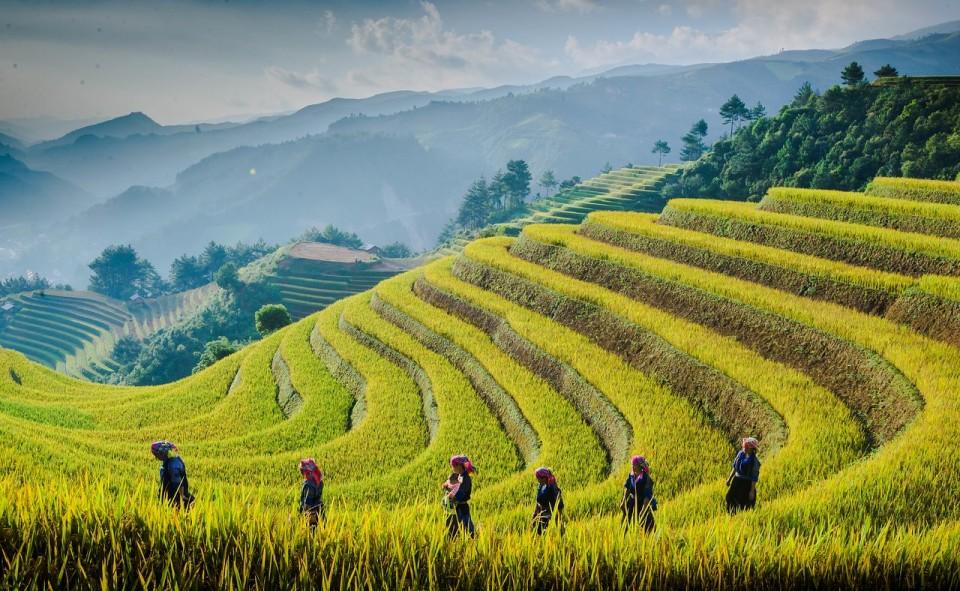 rice terrace - mu cang chai-vietnam - zonitrip