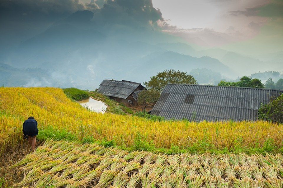 sapa, vietnam-rice terrace 960px