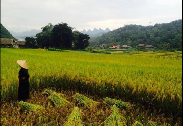 thon tha village- ha giang