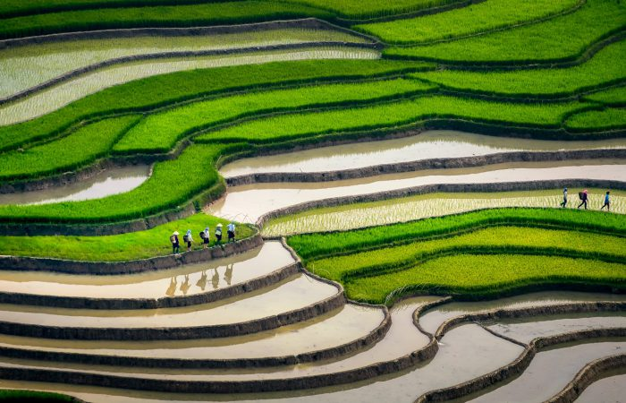 mu cang chai rice terraces - in water season