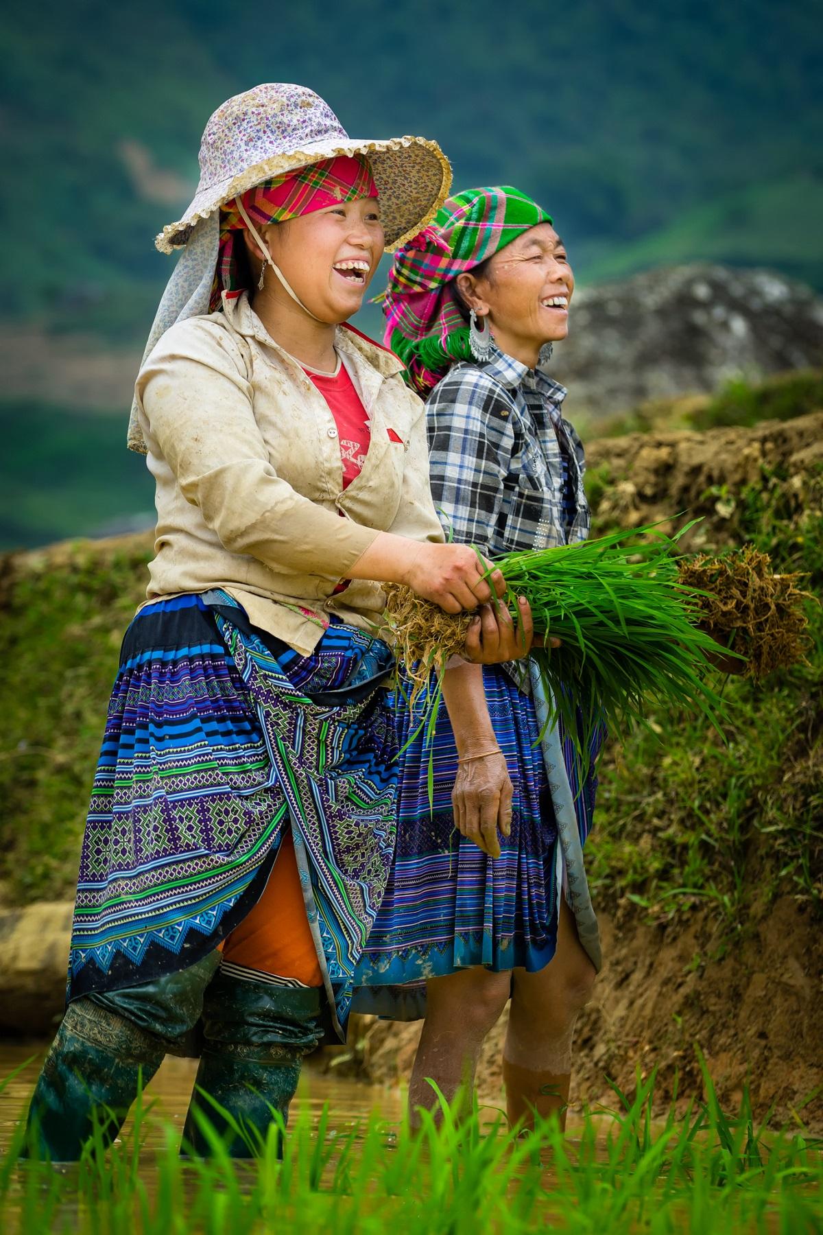 cô gái hmong cấy lúa