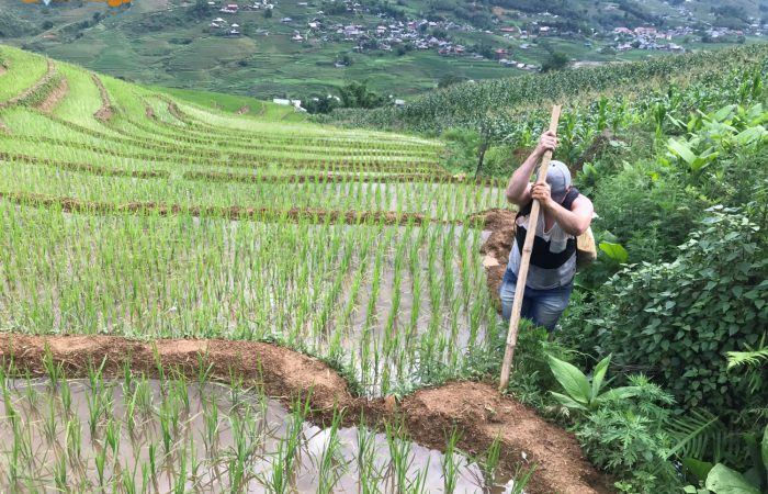 Trekking North VIetnam ( Mu Cang Chai, Sapa, Pu Luong...)